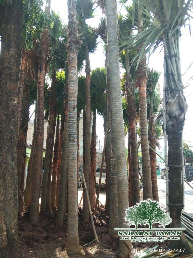 tukang pohon sadeng